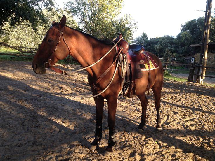 Puskas Western Saddle, Western mahagoni bridle,  Western mahagoni Breast Collars, Professional's Choice VenTECH Elite Boots, Easy Go It mecate reins