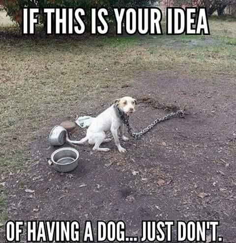 BE THEIR VOICES! DEMAND A BAN on CHAINING or TETHERING of DOGS throughout the UNITED STATES! HELP END one of the worst forms of animal cruelty in our nation! Please Sign and Share Widely! The dogs thank you!