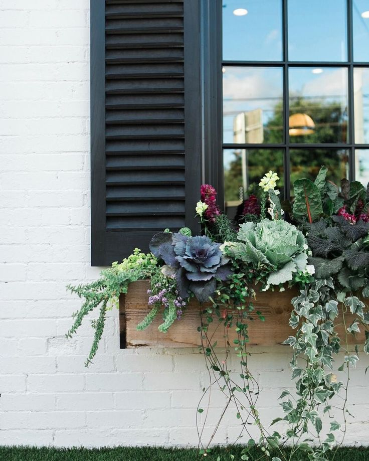 magnolia: It's a cool, breezy morning here in Waco. A little overcast, but these window boxes don't seem to mind. #magnoliasilos #silosbakingco #wacotown : @kellyhornberger