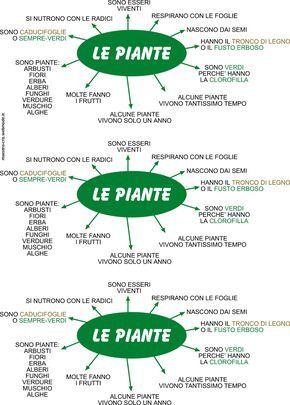 Le piante. Mappa didattica