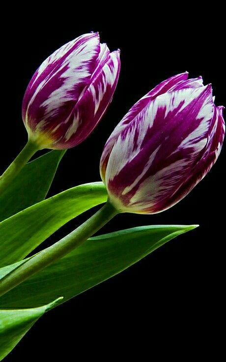 (notitle) – Цветы