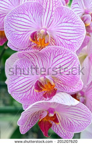 Flower images free stock photos download (10,975 Free stock photos) for commercial use. format: HD high resolution jpg images page (4/289)