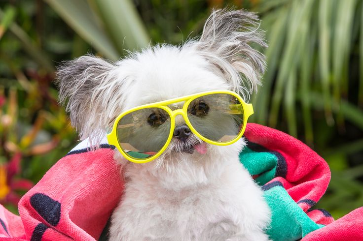 Norbert The Dog is pawsitively on point since summer is the time to sit back and relax. Snag a new pair of shades and pick up a bright beach towel while you're at it. Fun in the sun has never been so cool.