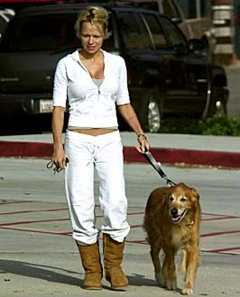 Golden Retrievers with Celebrity (Moms and Dads) - Pamela Anderson