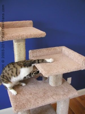 31 best images about cat condos on pinterest cat tree for Cat climber plans