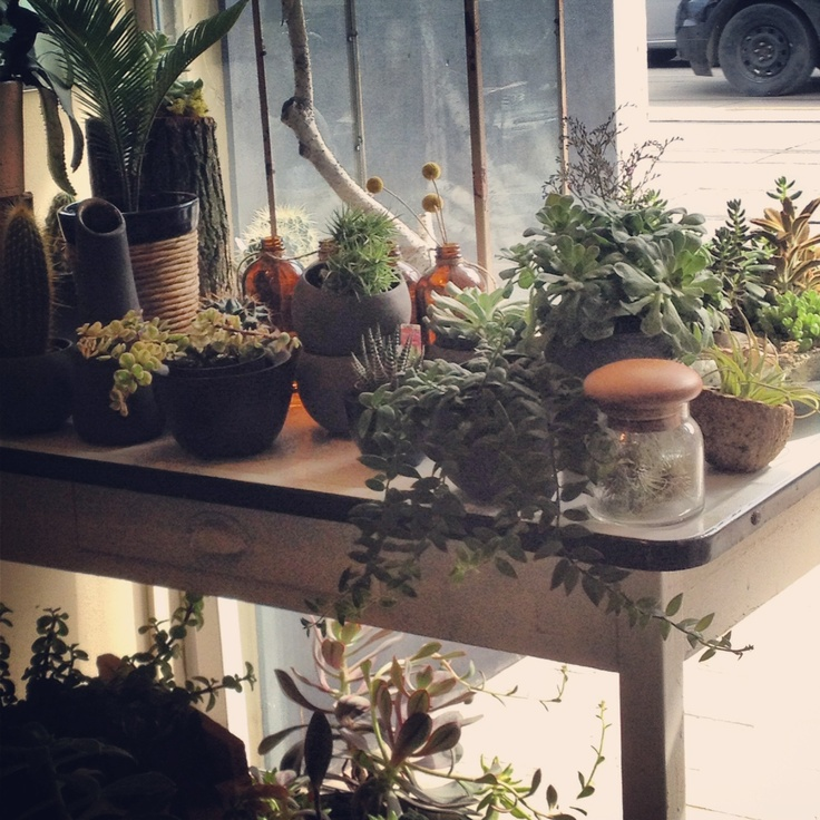 The shop window with lots of living goodies @botanystudio
