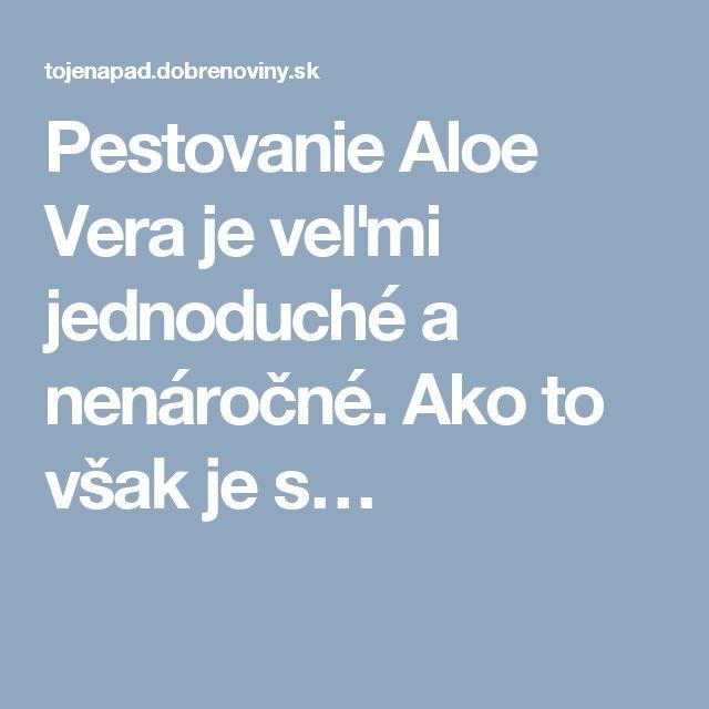 Pestovanie Aloe Vera je veľmi jednoduché a nenáročné. Ako to však je s…