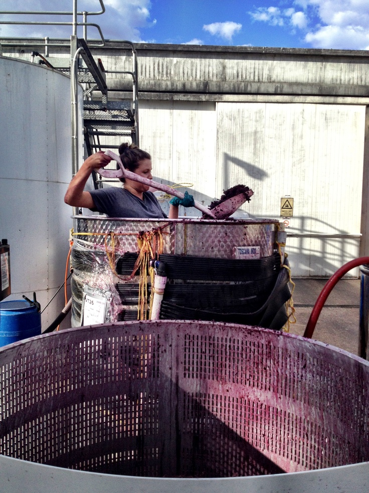 Our US Cellar Hand, Pam, scooping out some Pinot skins after being fermented.