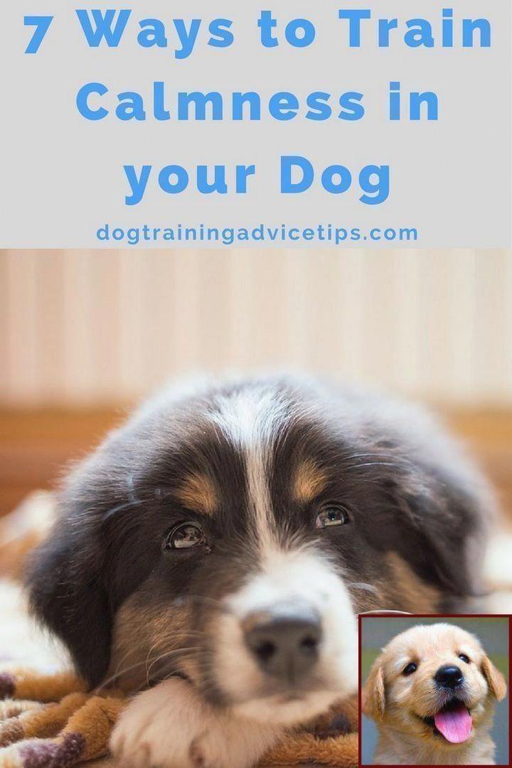 1 Have Dog Behavior Problems Learn About Dog Behavior