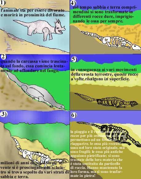 fossilizzazione - Cerca con Google