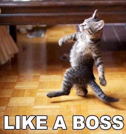 Like a boss ;) | We Heart It
