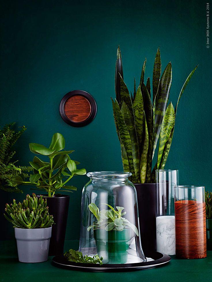 Julen är slut och granen är utkastad, det är dags att fylla upp tomrummet! Plantera, dekorera och släpp loss fantasin.  De grönsvarta tonerna blir en fin fond åt gröna växter i grupp och mönster av marmor och valnöt ger en exklusiv känsla, utan att kosta många kronor. Gör ett eget skåp, egna vaser och väggdekorationer med målarfärg, sprayfärg och plastfilm.