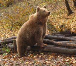 My favourite <3 I Európai barnamedve | Miskolci Állatkert és Kultúrpark
