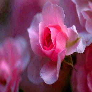 Imagenes De Flores Hermosas Para Descargar Gratis