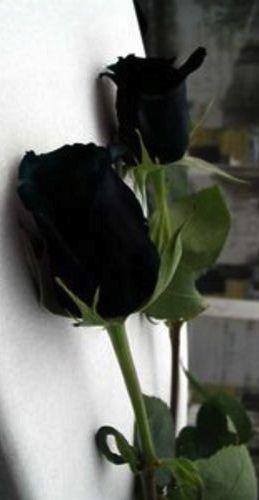 ✯*•.*☆° The Black Roses °☆*.•*✯