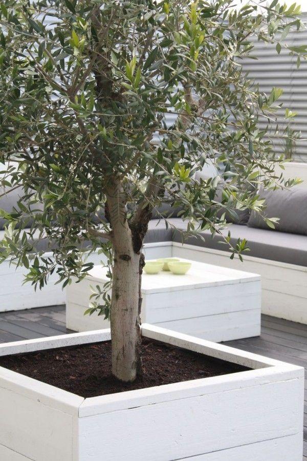 Spectacular Ontwerp dakterras Modern garden seating area with minimalist white planters and grey acce ts
