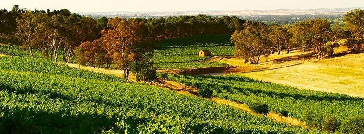 Gatt Wines, the Barossa. http://blog.posse.com/2014/05/13/the-best-date-places-in-aus-are-posses-city-by-city-guide-to-the-best-dating-spots-in-the-country/