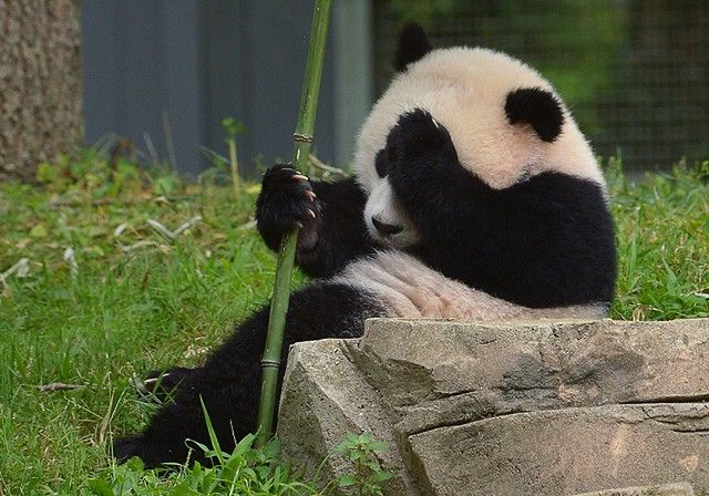 Лучшие фотографии животных за 2014 год — Рамблер-Новости