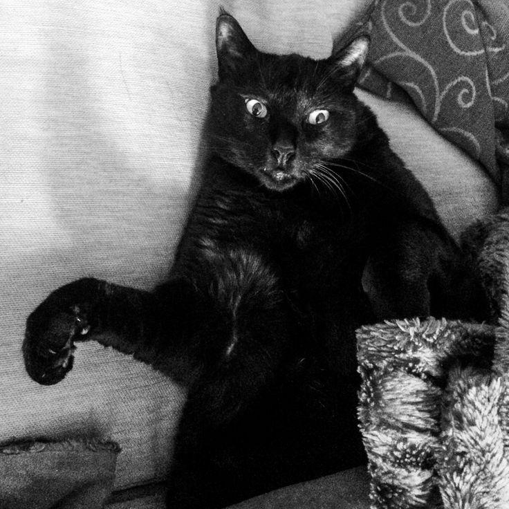 Black Cat #catitude