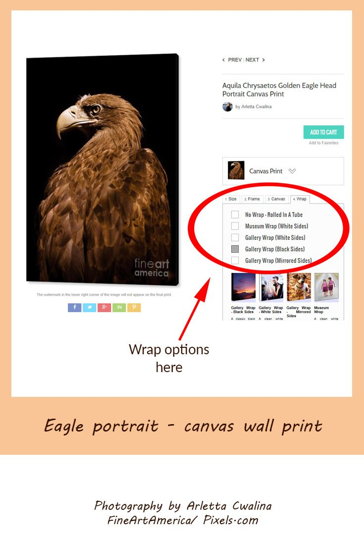 Powerful bird on black background, Aquila Chrysaetos Golden Eagle Head Portrait Canvas Print. Photography by Arletta Cwalina. See more clothes and home decor ideas and if you love it, feel free to share, maybe your friends would like to have it too :) #homedecor #eagle #wallprint