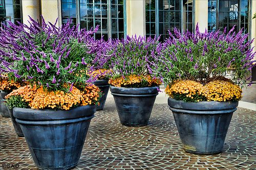 Large Flower Pots by bdphotog, via Flickr