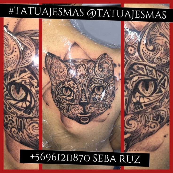 tatuajes de gatos,gato tatuaje,gato,cat,cat tattoo, catlover ,tatuador sebastian ruz dominguez, tatuajesmas, +56961211870
