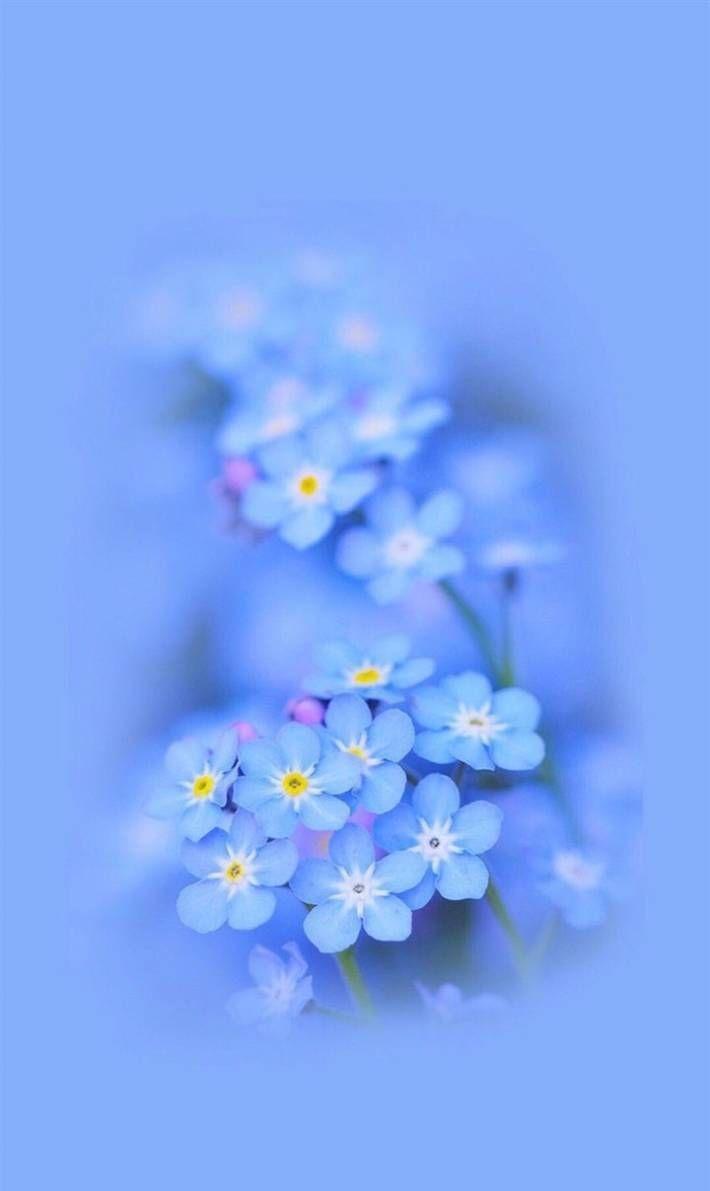 Blue Flower Wallpaper Blue Flower Wallpaper Flower Aesthetic Blue Flowers