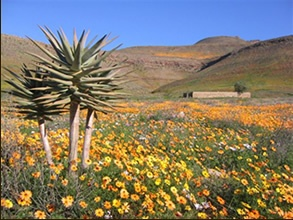 :: Welcome to Enjo Nature Farm :: guestfarm, cederberg, self catering, cottage, chalet, guest farm, guesthouse, farm , camping ::