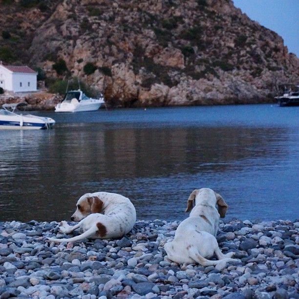 .@Engin Utkan - Dogs at Chios Emporiso Beach in Greece
