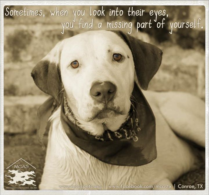 Sometimes When You Look Into Their Eyes You Find A Missing Part Of Yourself Animals Dog Love Dog Poems