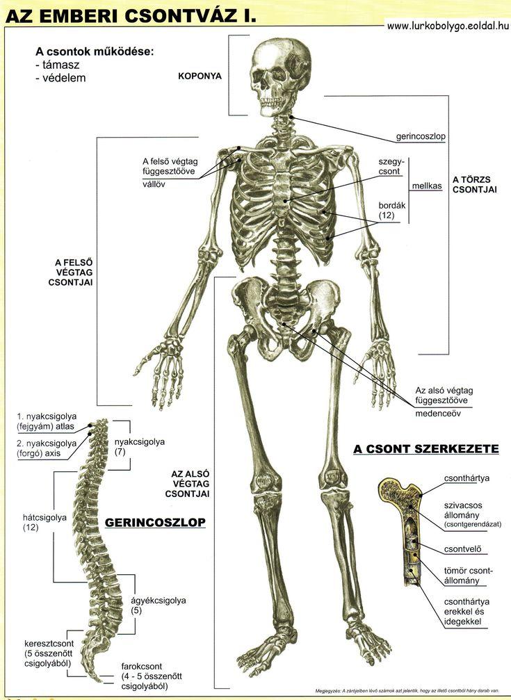 csontvaz1.jpg