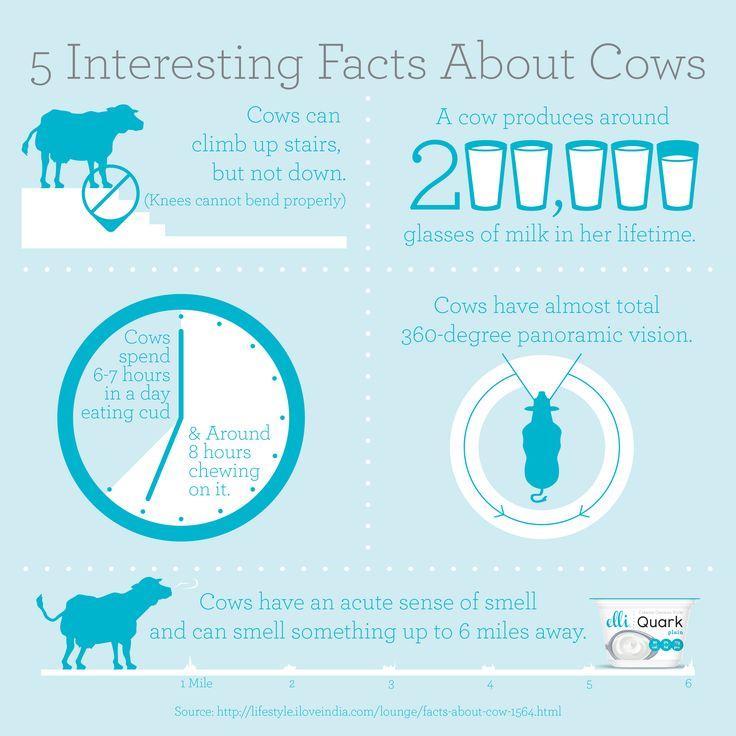 5 Interesting Facts About Cows | @Elli Schweizer Schweizer Schweizer Quark . #CowAppreciationDay
