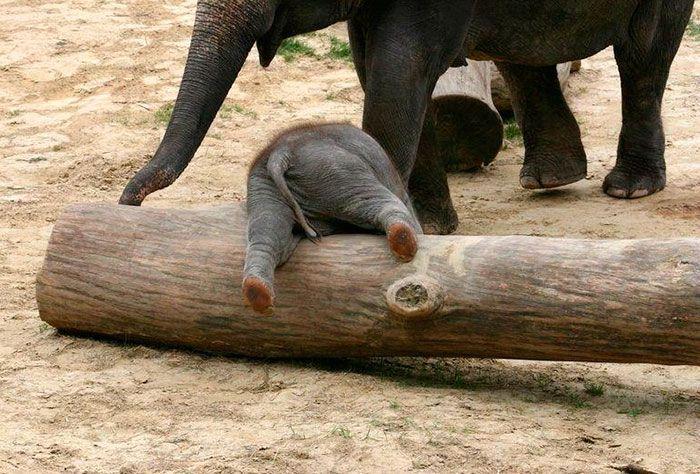 Bébi elefánt   fotó via boredpanda.com - PROAKTIVdirekt Életmód magazin és hírek - proaktivdirekt.com