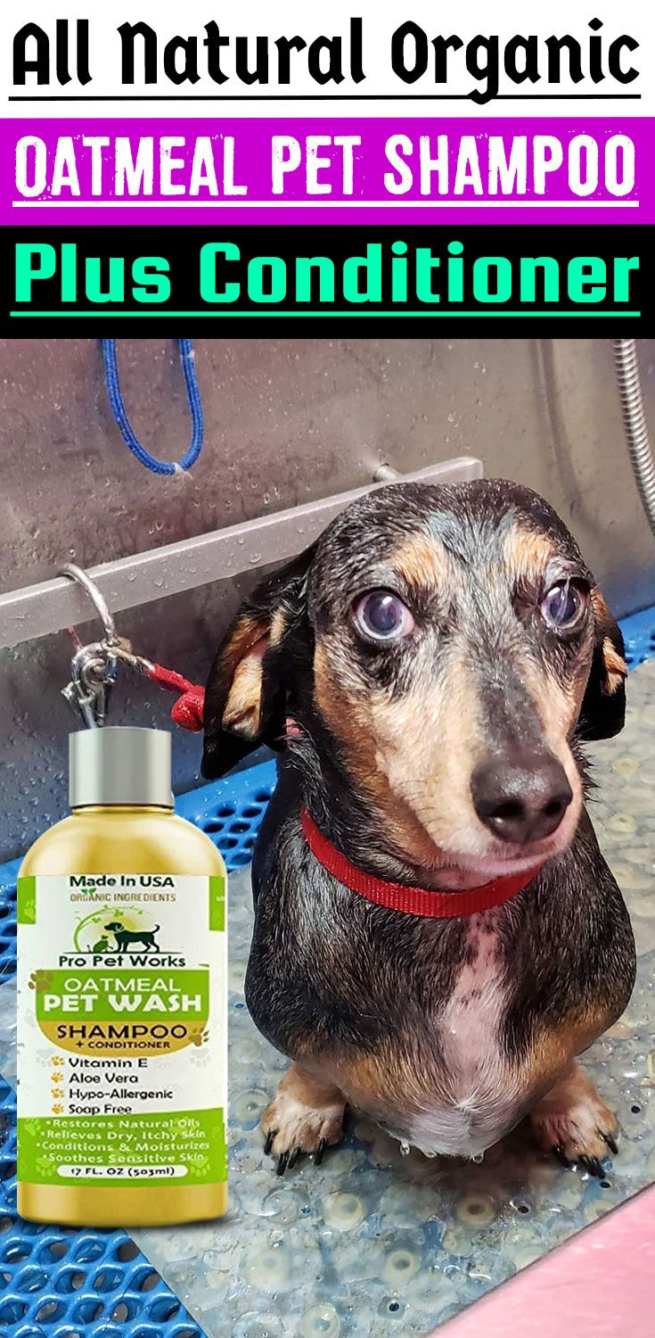 Our Oatmeal Dog Shampoo And Conditioner Is Recommended By Vets And