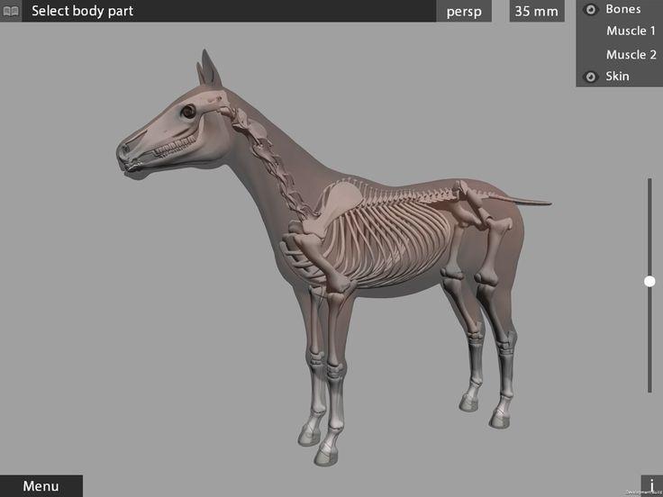 3d Animal Anatomy Images Human Body Anatomy