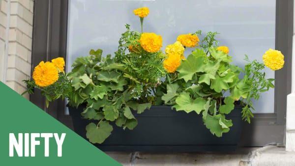 No Drill Window Box Window Box Flowers Window Planters Flower Window
