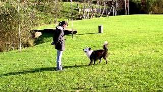 Dog training tricks galore Claudia Estanislau - YouTube