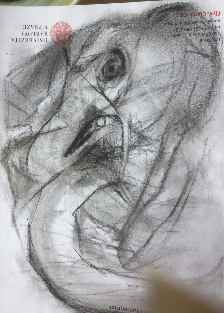 Inexcusably Angry Pachyderm, charcoal on envelope