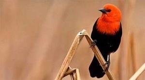 Usando el primer árbol filogenético en el mundo que presenta las relaciones de parentesco evolutivo existentes entre todas las especies de aves conocidas, unos investigadores han descubierto que el ritmo de evolución de los pájaros parece estar acelerándose. Esto no es lo que los científicos esperaban encontrar. + info: http://www.ecoapuntes.com.ar/2012/12/la-evolucion-de-los-pajaros-parece-estar-acelerandose/
