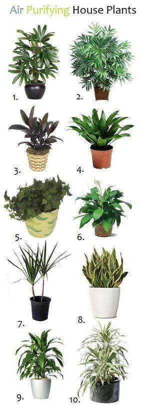 10 Air Purifying House Plants: 1.Lady palm (Rhapis excels) 2.Bamboo palm (Chamaedorea seifrizii) 3.Rubber plant (Ficus robusta) 4.Janet Craig (Dracaena deremensis) 5.English ivy (Hedera helix) 6.Peace lily (Spathiphyllum sp.) 7.Red-Edged Dracaena (marginata) 8.Snake Plant (Sansevieria trifasciata) 9.Dracaena deremensis (Janet Craig) 10.Warneck dracaena deremensis (Warneckii)