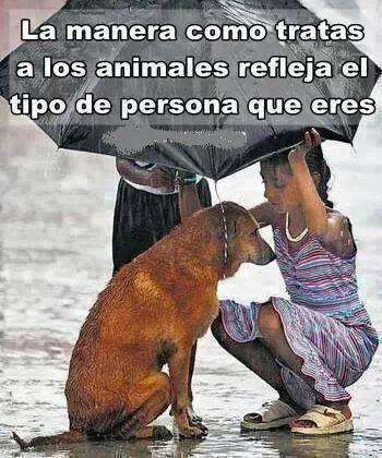 Como tratas a los animales refleja tu manera de ser