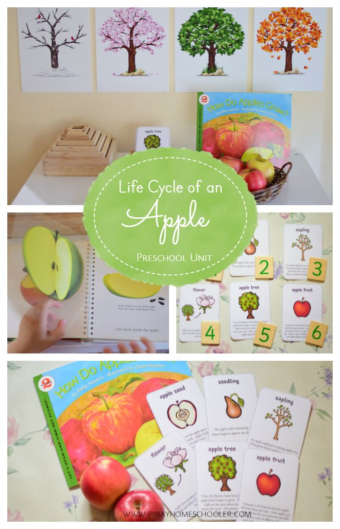 Preschool Life Cycle of an Apple