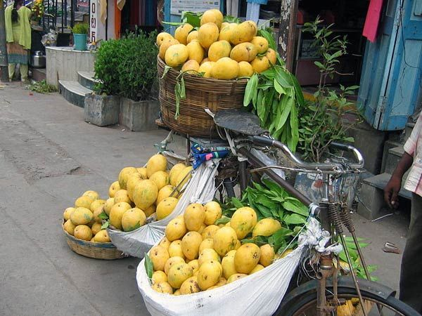 Different Types Of Mangoes In India ♥♥♥