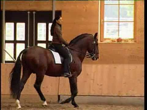 Elegant Dressage Training - a series of dressage training dvds by Thomas Vogel and Anja Beran. Beautiful riding, soft, light and empathetic. Just what dressage should be.