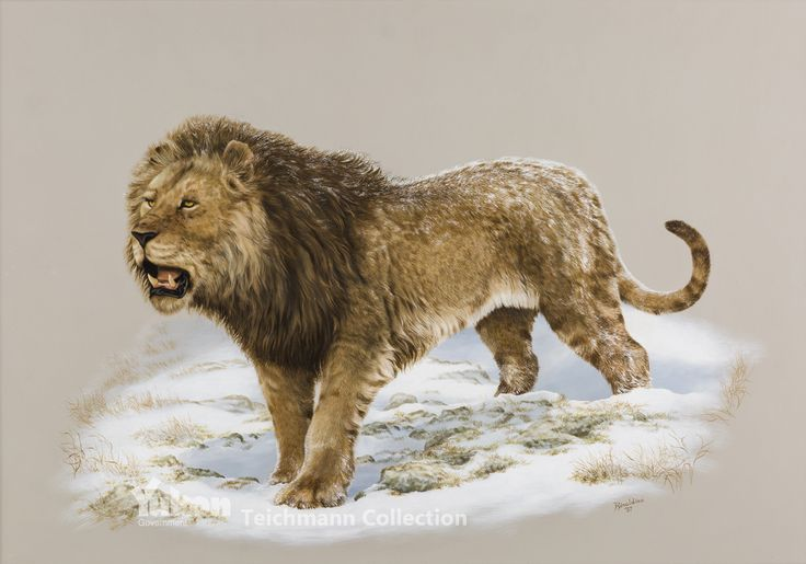 American Lion by George 'Rinaldino' Teichmann