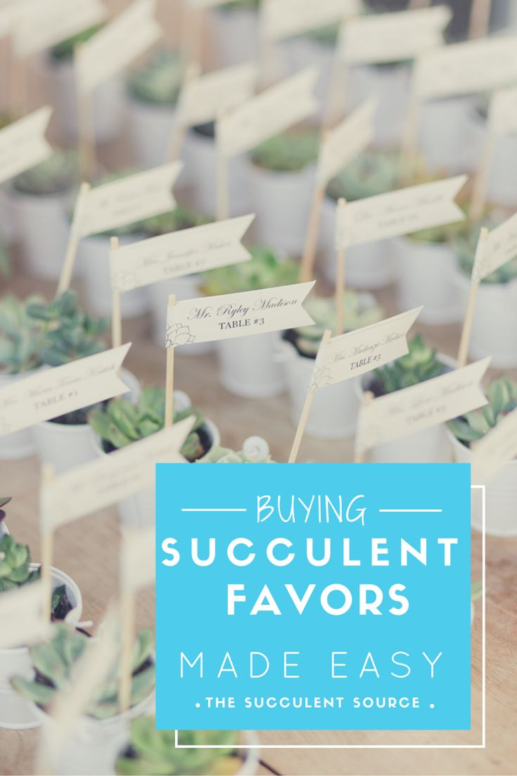 Succulent favors are perfect for weddings, events, bridal showers and baby showers!   We sell all types and sizes to meet your needs!