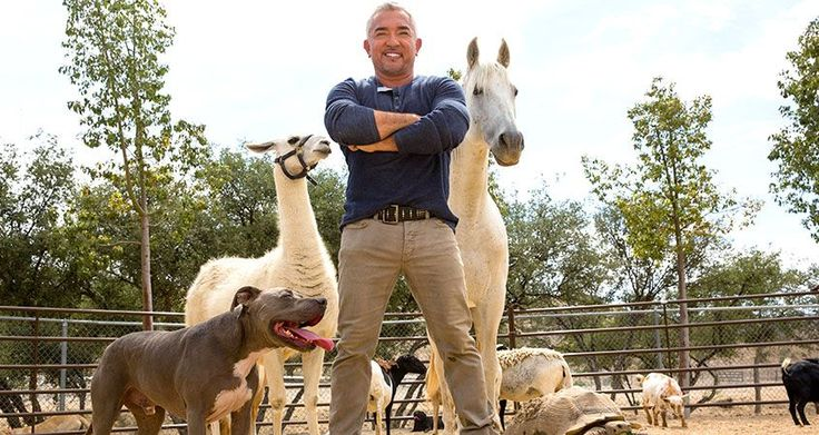 Cesar Millan - The importance of the dog walk