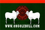 Ongole History:: OngoleBull :: ongolebull.com