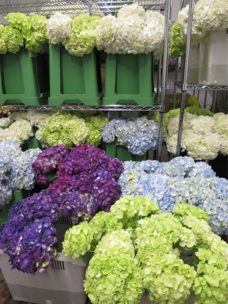 #hydrangea #farm #Colombia We are a direct importer of these beautiful blooms, ensuring highest quality and most competitive prices.