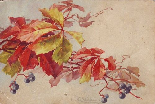 beatiful leaves